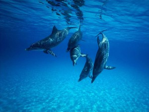 дельфин сонник