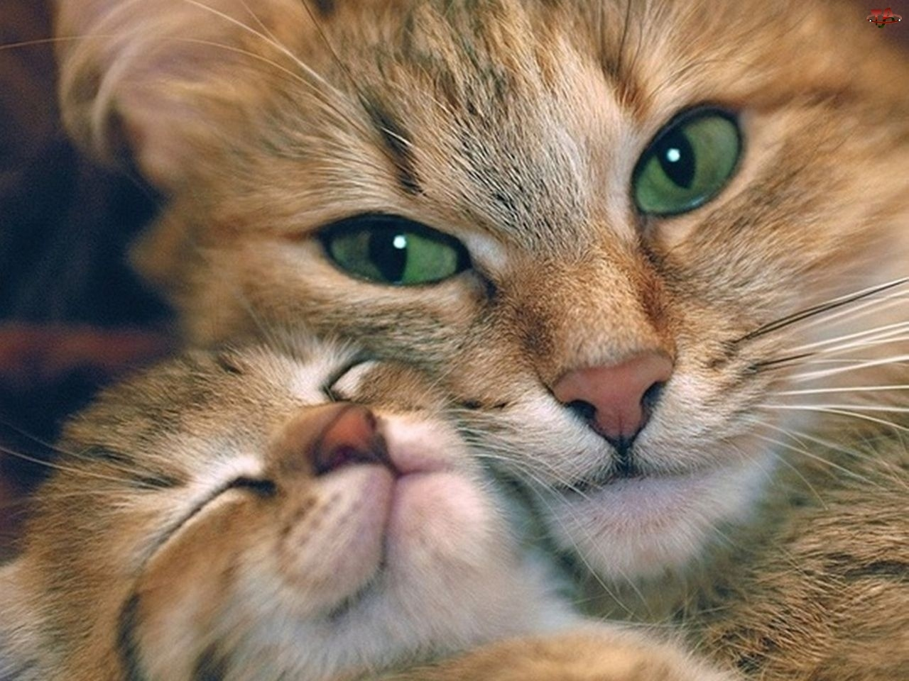 снились коты и котята